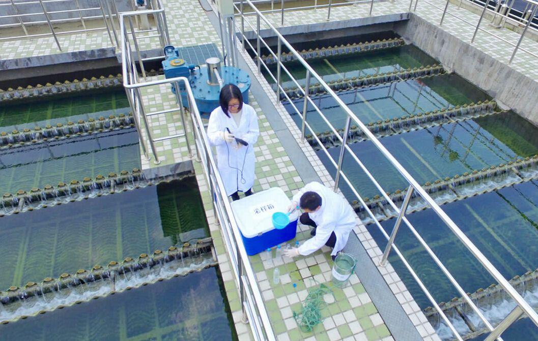 检测水质中氨氮的含量